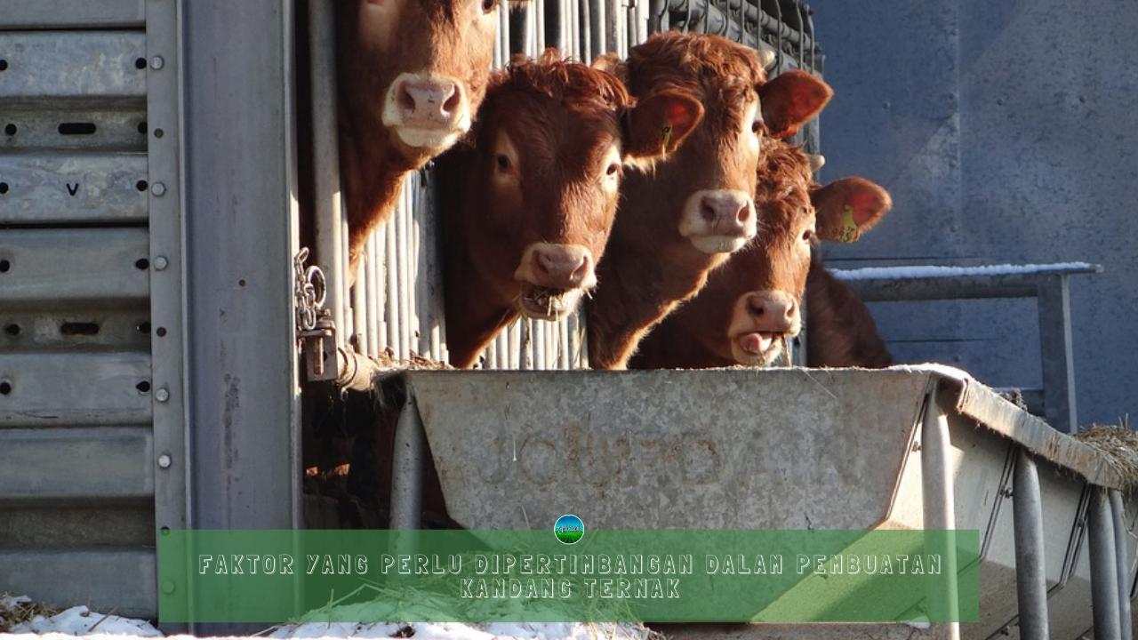 Faktor yang Perlu Dipertimbangan Dalam Pembuatan Kandang Ternak