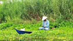 Kinh nghiệm câu cá ở bối bèo trên sông thoát nước nội đồng