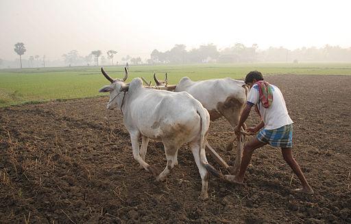 """Farmers Agitated For The New Farm Bill, Announced The """"Delhi Chalo"""" Movement"""