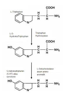 Biosintesis serotonin