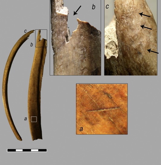 Evidence of cannibalism found in Mesolithic Spain