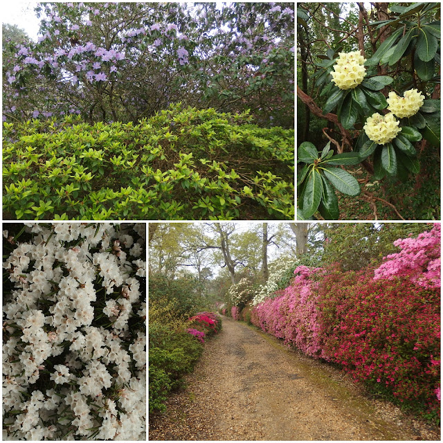 Just a few of the rhododendrons at Exbury Gardens
