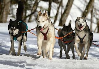 اهم نصائح  تدريب الكلاب