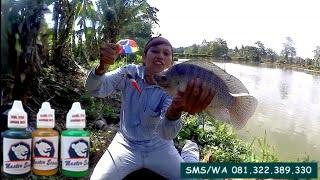 Essen Ikan Nila