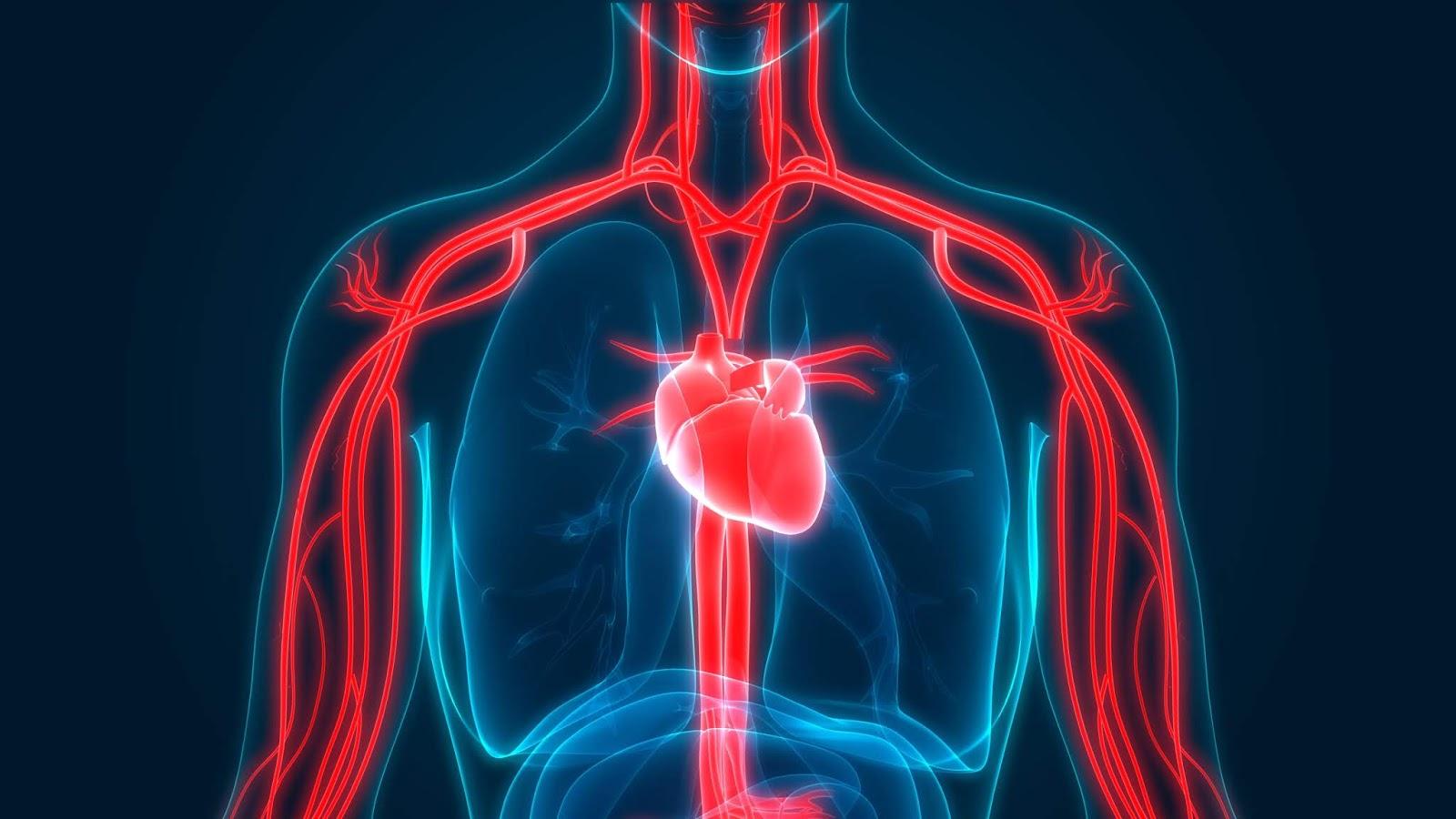 3 Komponen Penting di Dalam Sistem Sirkulasi Darah yang Perlu Diketahui