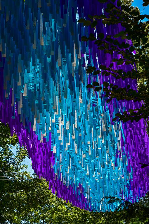 Dream Flora | Atlanta Botanical Garden | Photo by Travis Swann Taylor