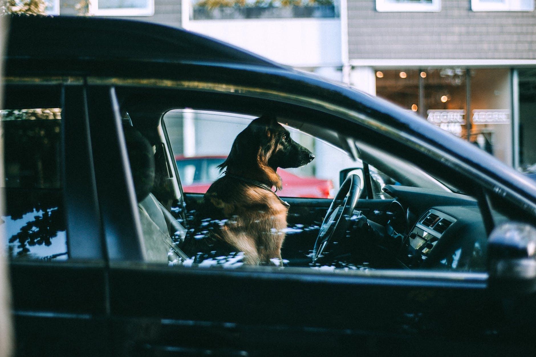 Comment voyager avec son chien en toute sécurité en voiture?