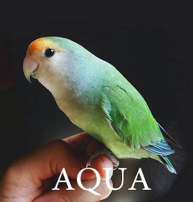 Muka Salem Aqua