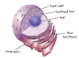 مكونات الخلية
