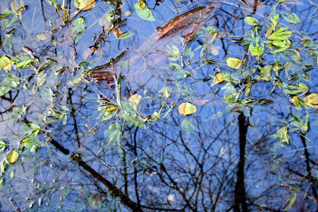 Whinlatter Forest