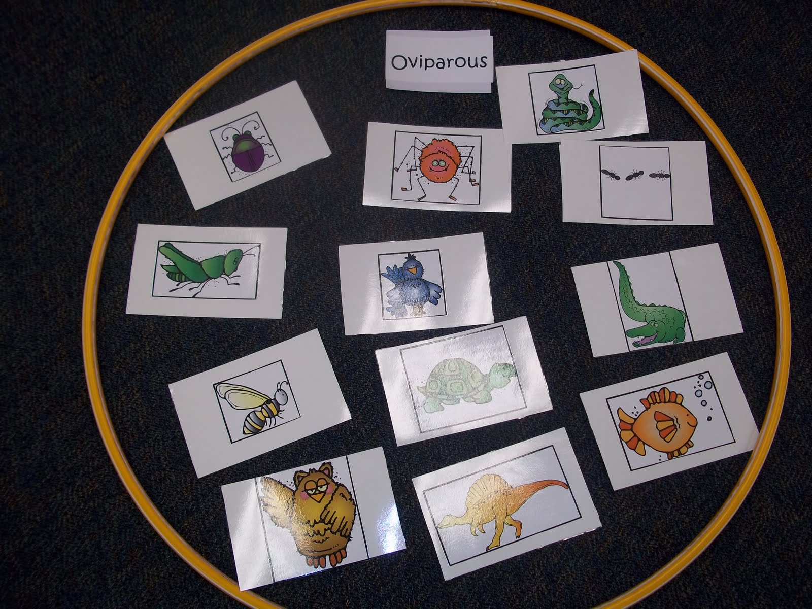 Mrs Wood S Kindergarten Class Oviparous And Mammal Sort