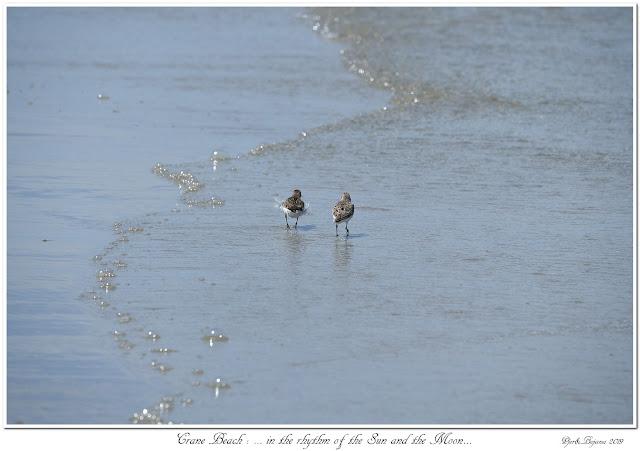 Crane Beach: ... in the rhythm of the Sun and the Moon...
