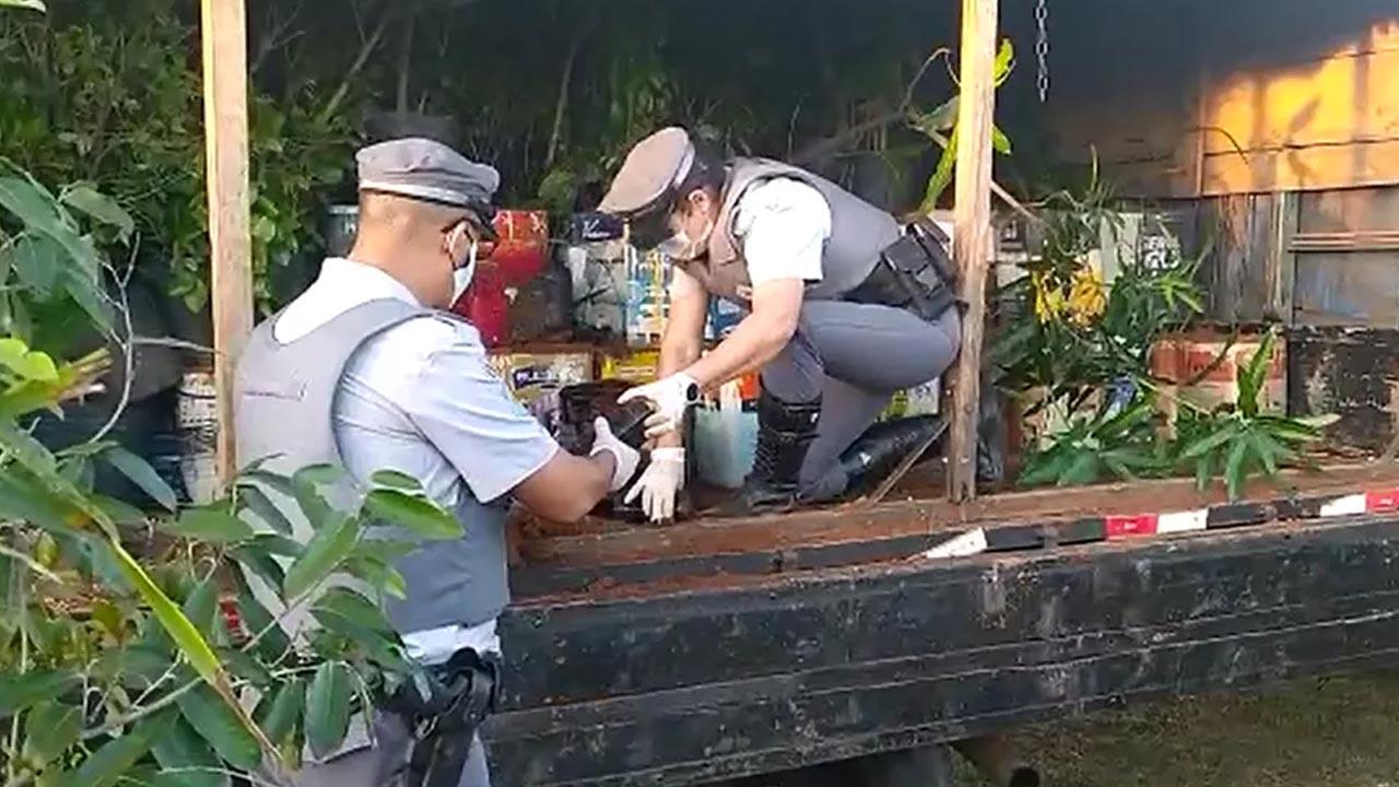 Caminhão escondia 800 quilos de maconha entre mudas de plantas