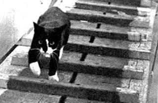 Sam, el gato que sobrevivió a tres hundimientos de buques de guerra