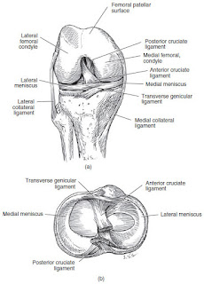 Anterior Cruciate Ligament Rupture Case File