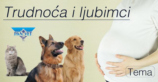Trudnoća beba i kućni ljubimci, životinje
