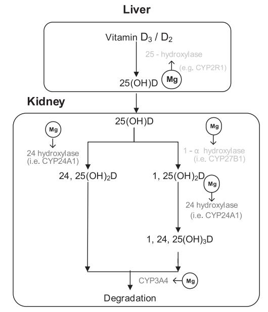 d vitamin magnesium