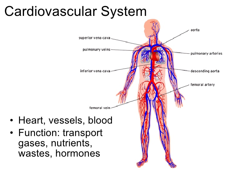 DamaiMedic Klinik Kota Kinabalu: OUR BODY\'S COMMUNICATION SYSTEM ...