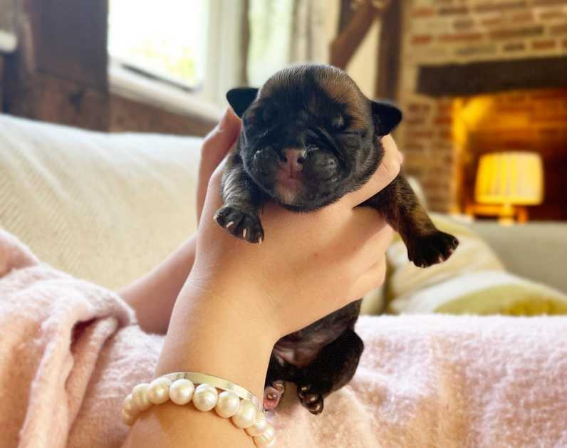 How to Feed an Orphaned Newborn Puppy