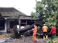 Hujan Angin Di Berbah Tumbangkan Pohon Timpa Lima  Rumah Satu Gudang