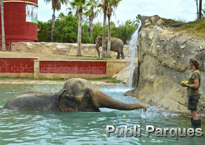 elefantas de Terra Natura Benidorm