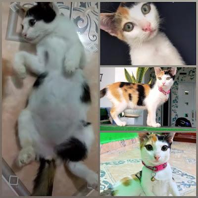 Syarat Steril Kucing di Batam