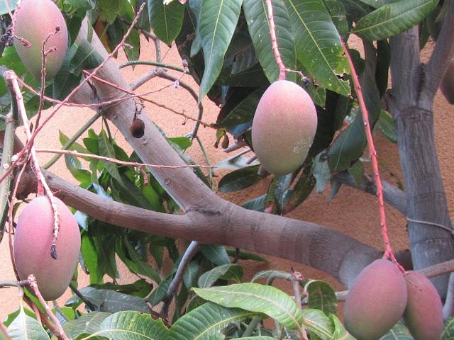 Frutti e Legno