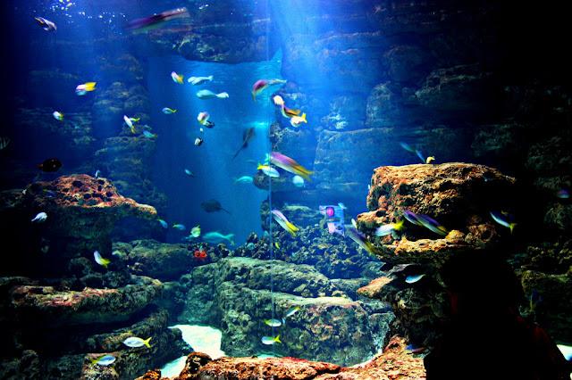 Tanque de peixes do Aquarium Cinéaqua de Paris