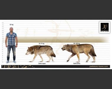 Canis dirus and Canis lupus