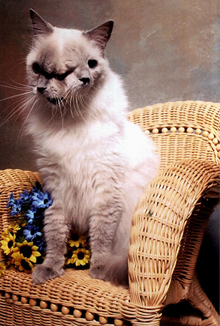 frank e louie o gato de duas caras carlos romero