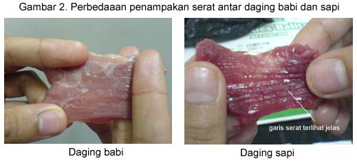 perbedaan serat daging sapi dan babi