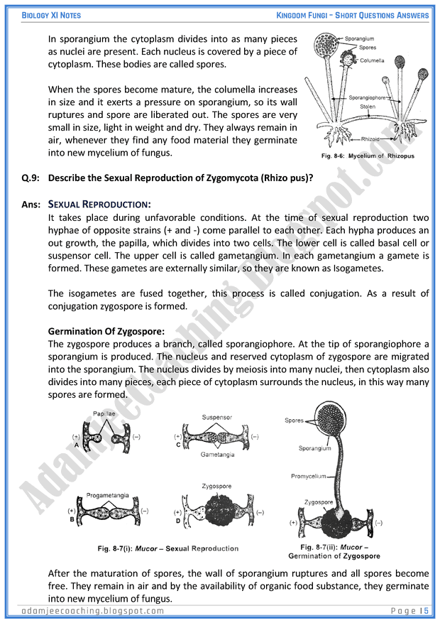 kingdom-fungi-short-question-answers-biology-11th