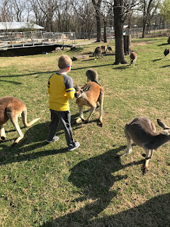 Kangaroos at Wild Wilderness Drive Through Safari in Gentry, Arkansas