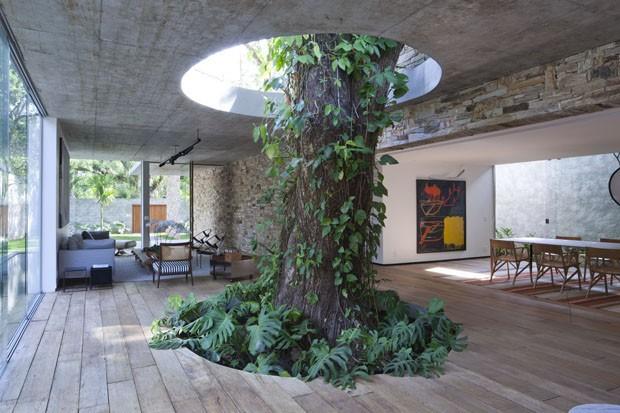 ต้นไม้ใหญ่ในบ้าน