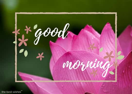 good morning monday images for whatsapp with pink flower