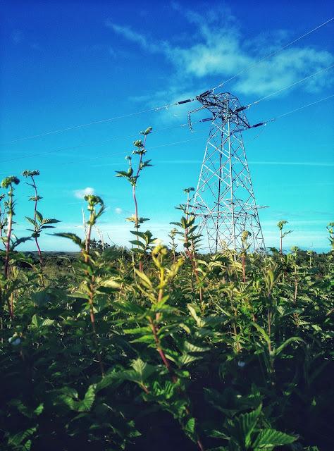 green countryside, Moycullen area