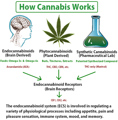 How_Cannabis_Works_www.living2inspire.com