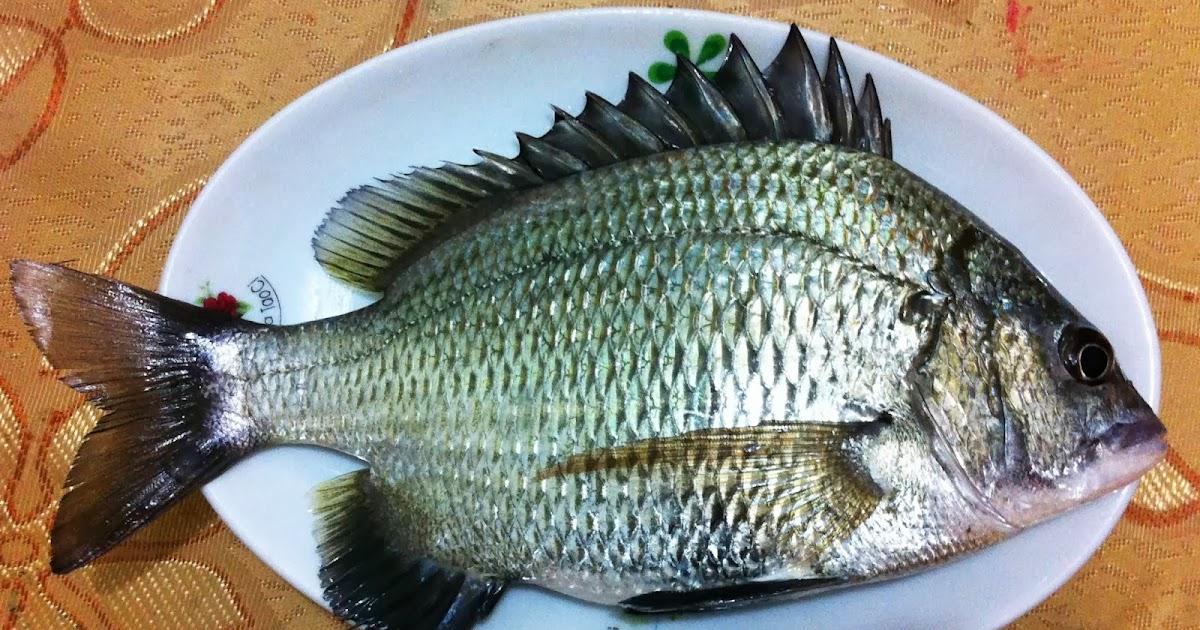黑格活蝦釣法   c nxu 1 釣法
