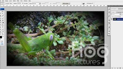 Membuat Efek Vignette di Photoshop - Hog Pictures