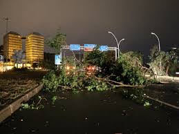 A força da natureza é incomensurável. o vento derrubou árvores nas ruas , avenidas e parques de Porto Alegre-RS, Brasil.