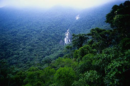 amazon rainforest south america - photo #25