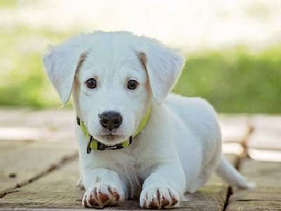 Pet Animals Name