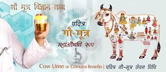 benefits-cow-urine-or-gomutra-hindi, gomutra-cow-urine-in-hindi, cow urine ke fyade, cow mutra fyade