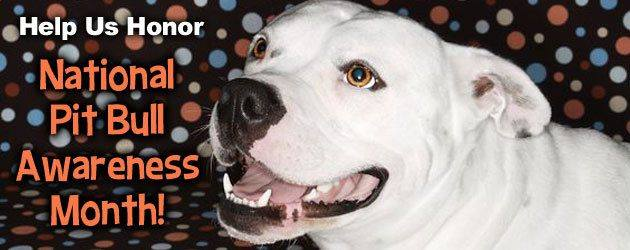 National Pit Bull Awareness Day Wishes Awesome Images, Pictures, Photos, Wallpapers