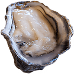 oyster in spanish