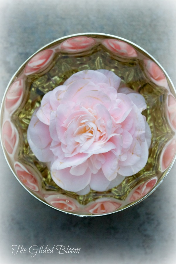 Pink Camellia in a Bowl www.gildedbloom.com #floralstyling