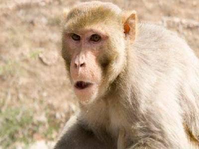 Pet Animals Name Monkey