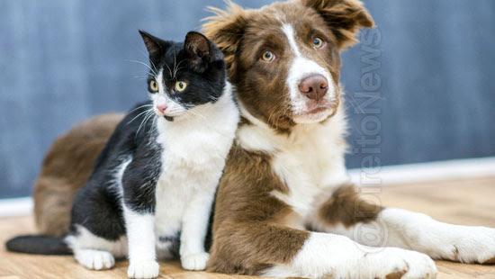 caes gatos processar donos maus tratos