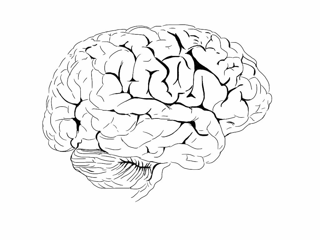 Brain Jack Image Brain Coloring Book