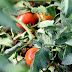 Vegetable production budgets available for High Plains growers
